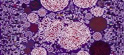 Darkweb Hyperiongray Tor Onionservices Cyber Internet Websites Network
