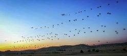 Folgore Italia Esercitoitaliano Saberjunction Airbornecommunity Usa NATO Sicurezza 3