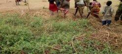 Nigeria Lafiyadole Bokoharam Modukinetic Prigionieri Africa Schiavesessuali Donne Bambini Uomini Terrorismo